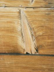 dřevo suk