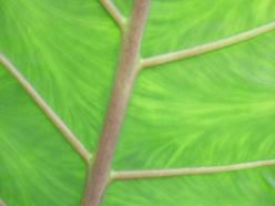 žilná struktura