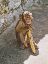 opičí kukuč