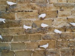 holubí zeď