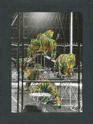 tygři cirkus