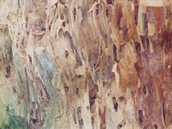 dřevokaz