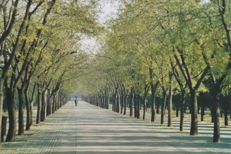 symetrické stromy
