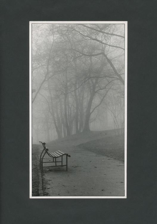 mlha v parku