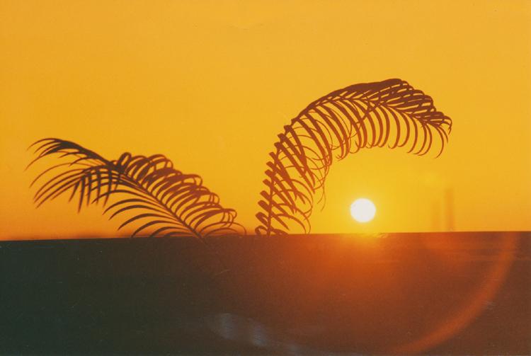 palma a slunce