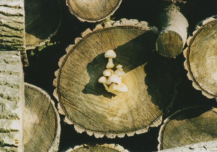 houbičky a houba